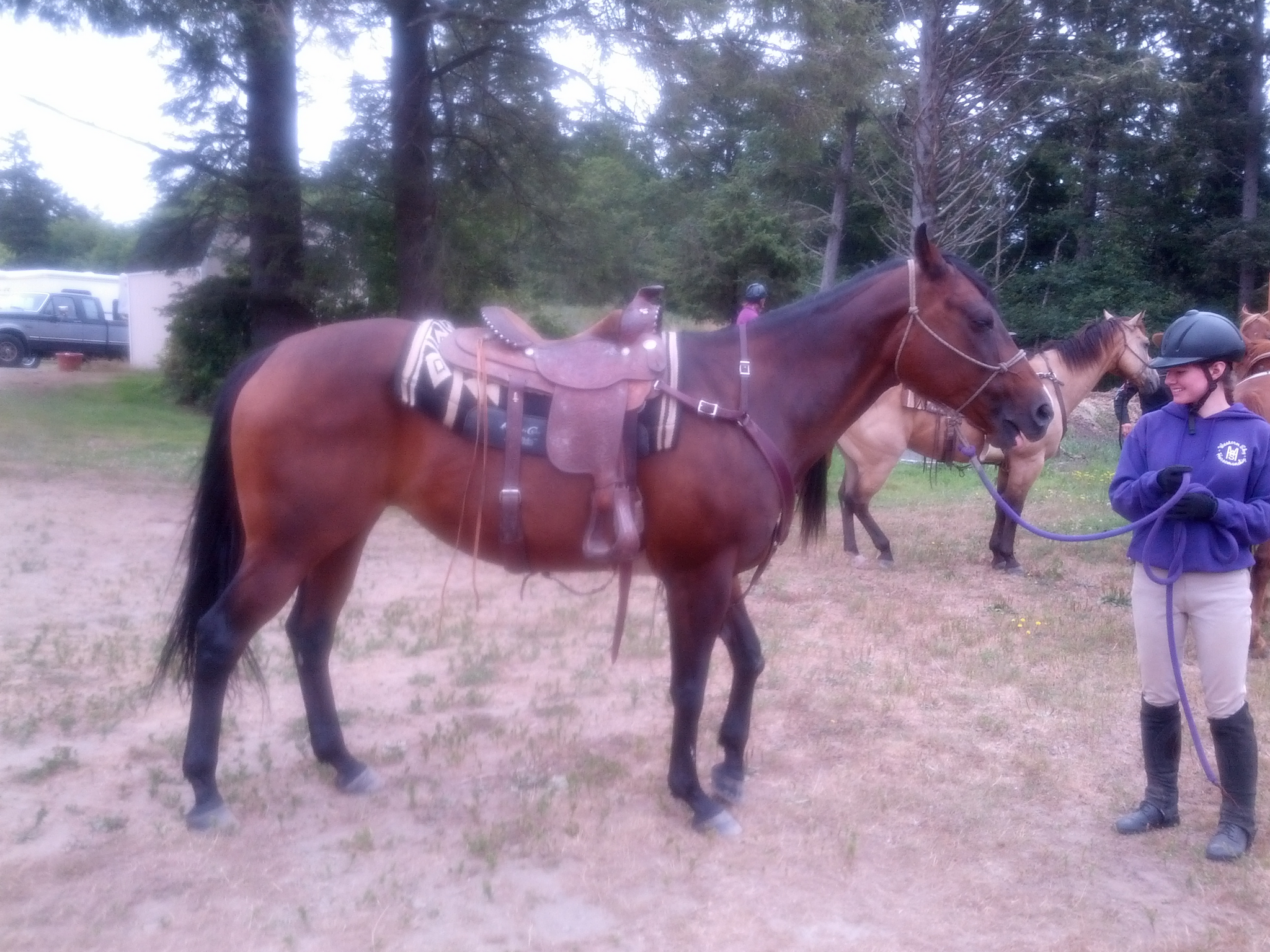 Photos of The Horses 8.21.14